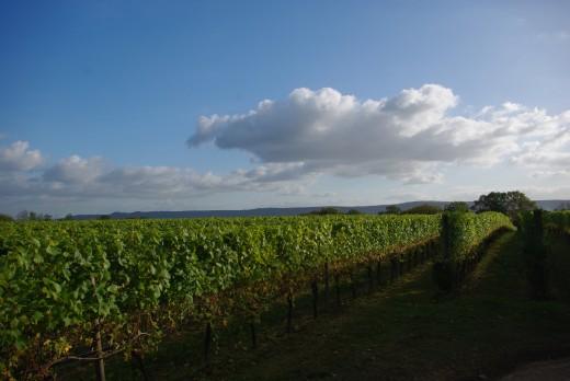 RV Vines and Landscape shots (6)